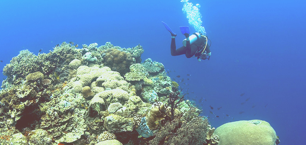 Sensasi menyelam di wilayah Wakatobi, Sulawesi