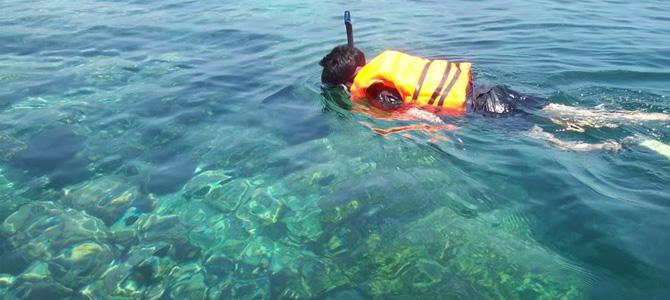 Snorkeling di sekitar Semak Daun