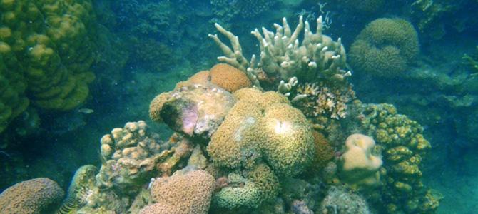 Terumbu Karang Pulau Karang Beras