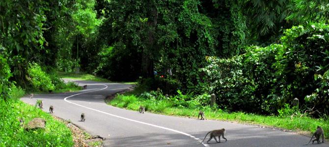 Pusuk Monkey Forest