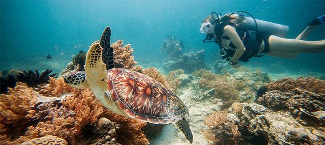 snorkeling di gili trawangan penyu x