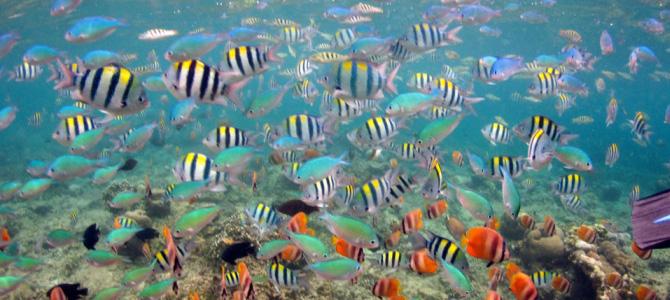 snorkeling di gili trawangan x