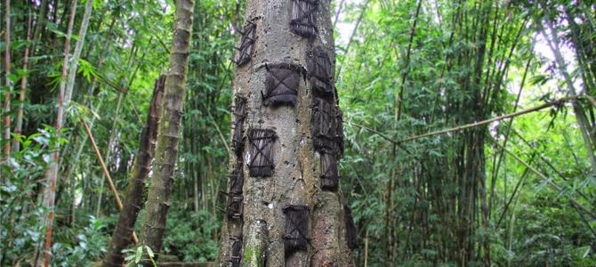 Kuburan Bayi Pohon Tarra (Laurentravelingteacher Blog)