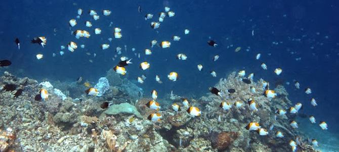maratua underwater marischka prudence 3x