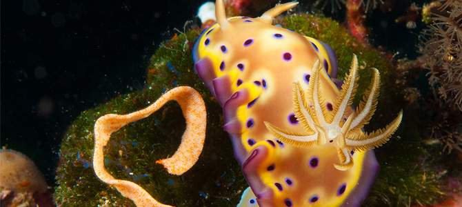 Nudibranch  (Foto: Alan Saben)