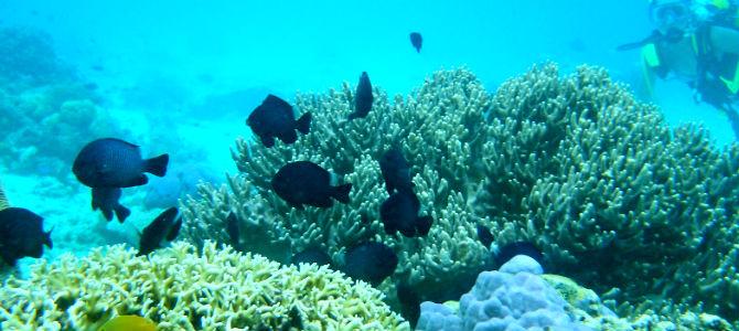 underwater moyo 1x