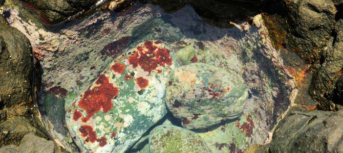Akuarium alam dengan batu hijau