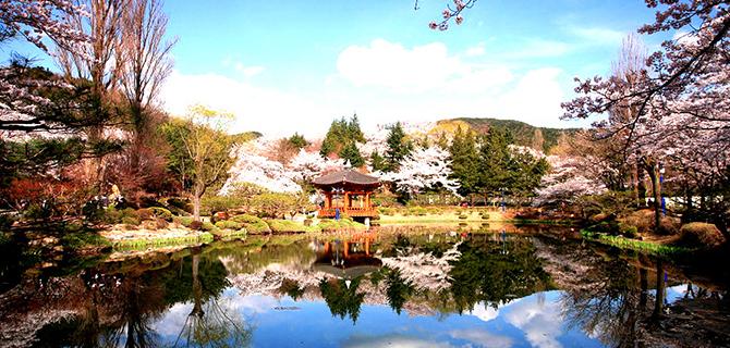 Bomun Pavilion saat musim semi (IMG: Duhoc Daystar)