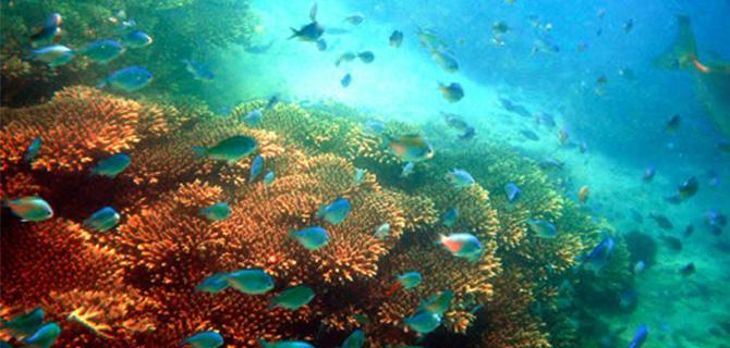 Gili Tangkong, underwater