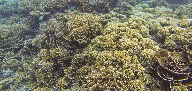 Gili Layar, underwater