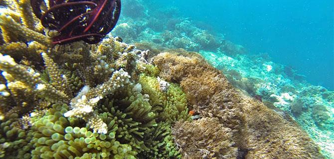 Gili Rengit, underwater