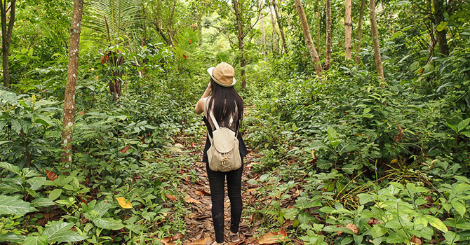 Hutan Liwungan (IMG: Wira Nurmansyah)