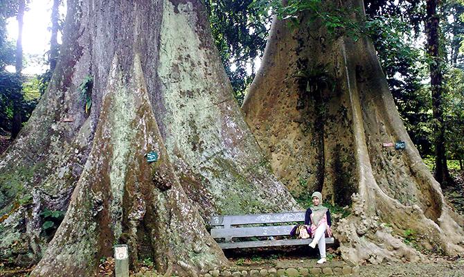 Pohon Jodoh (IMG: Togelhoki)