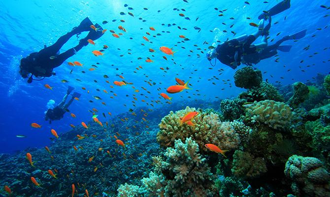 Kanawa diving (IMG: tantular)