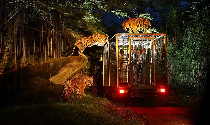 night safari via baligo