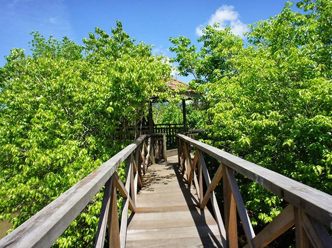 via mangrovecengkrong