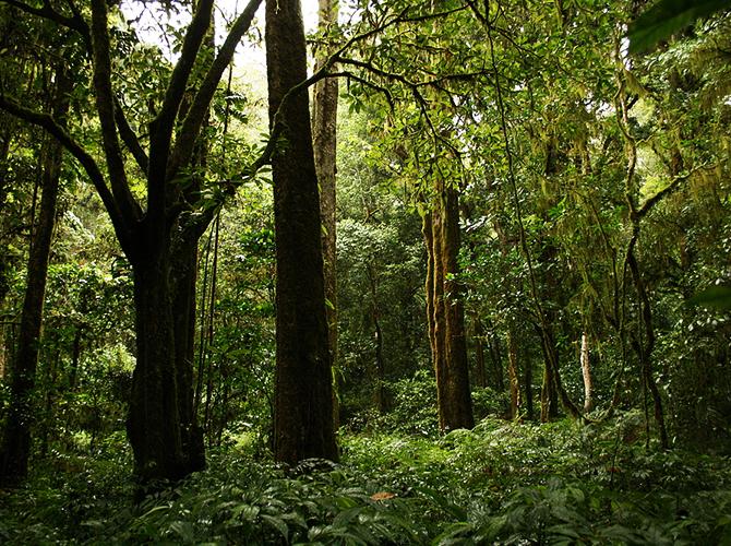 Hutan tropis Tamblingan via balijungletrekking