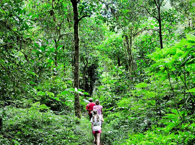 Trekking menembus hutan via villabossibali